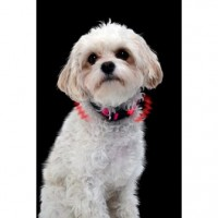 NITE DAWG XS LED Hundehalsband, pink